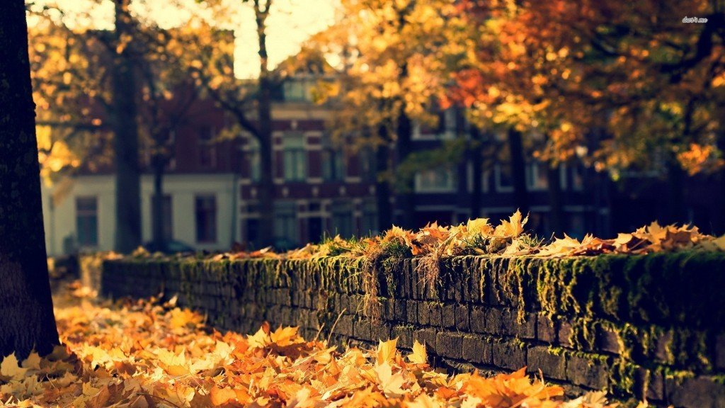fall-street-autumn